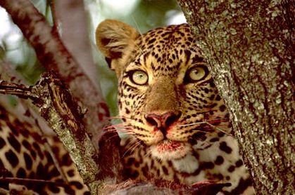 Afrika, Tiere, Afrikaalaska, Fotografie, Alaska, Satt