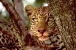 Afrikaalaska, Tiere, Afrika, Fotografie