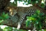 Tiere, Afrika, Afrikaalaska, Alaska