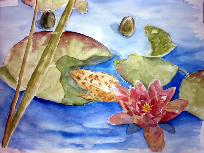 Frosch, Seerosen, Teich, Aquarellmalerei, Aquarell