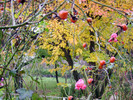 Szigetszentmiklós, Landschaft, Stillleben, Garten
