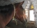 Pferde, Fotografie, Tiere,