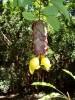 Fotografie, Reiseimpressionen, Blüte