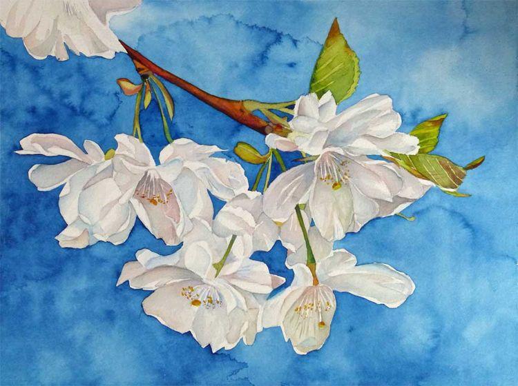 Aquarellmalerei, Kirschblüten, Frühling, Aquarell,