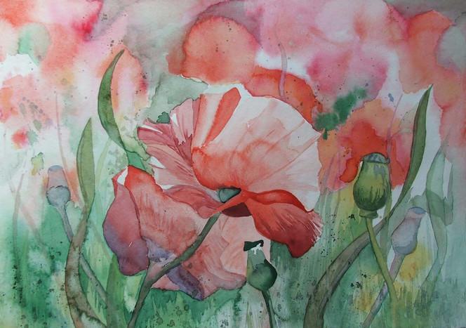 Vorpommern, Aquarellmalerei, Mecklenburg, Mohn, Blumen, Blüte