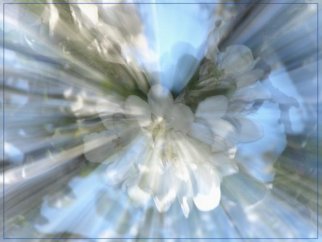 Fotografie, Lichtmalerei, Blüte, Lightpainting, Kirschblüten, Wischeffekt