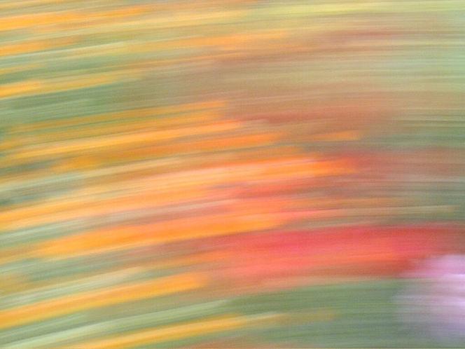 Abstrakt, Wischeffekt, Verwischen, Lichtmalerei, Lightpainting, Blumen