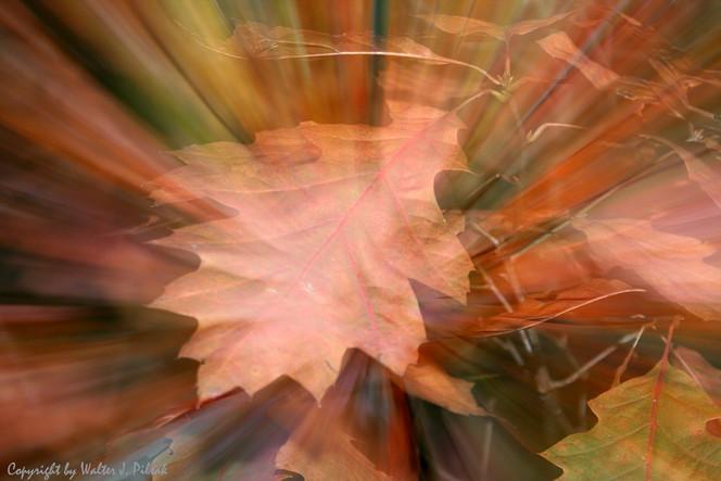 Verwischen, Blätter, Lichtmalerei, Wald, Abstrakt, Fotografie