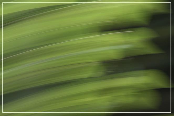 Lichtmalerei, Wischeffekt, Abstrakt, Verwischen, Baum, Fotografie