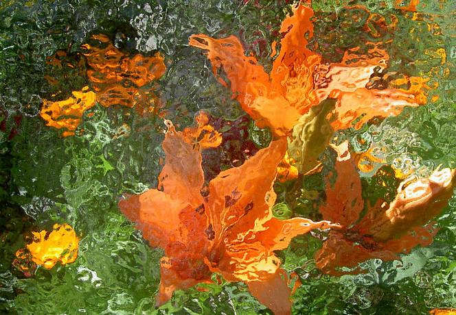 Blumen, Fotografie, Blüte, Lilien, Lightpainting, Wald