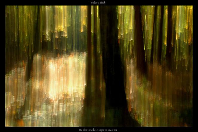 Lightpainting, Abstrakt, Wischeffekt, Fotografie, Herbstwald, Lichtmalerei