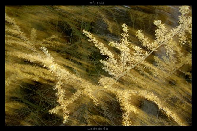 Verwischen, Abstrakt, Lichtmalerei, Wald, Fotografie, Lightpainting