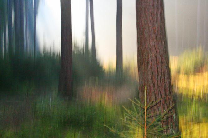 Wald, Blätter, Lichtmalerei, Lightpainting, Baum, Abstrakt