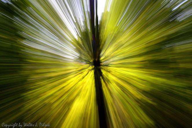 Verwischen, Blätter, Lichtmalerei, Wald, Abstrakt, Lightpainting