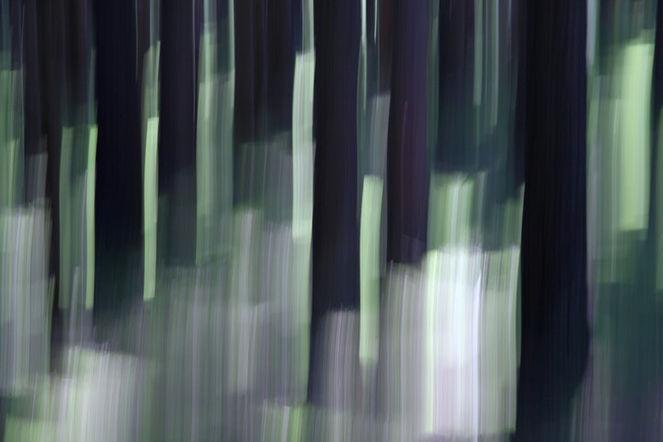 Lichtmalerei, Wischeffekt, Abstrakt, Verwischen, Lightpainting, Wald