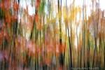 Lightpainting, Baum, Herbstwald, Wischeffekt