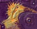 Vogelkopf, Digital, Digitale kunst, Feuervogel