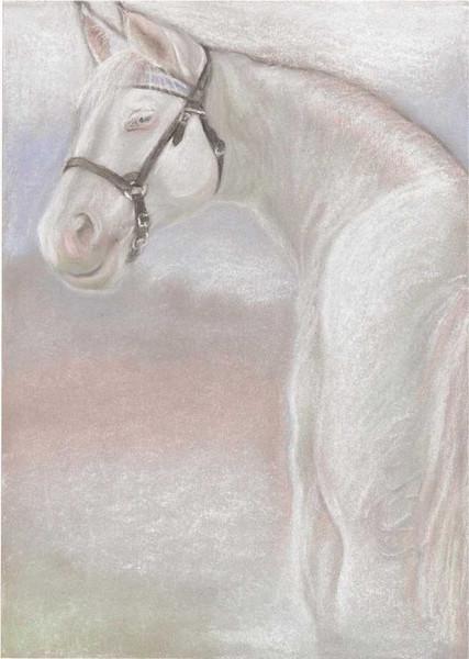 Pferde, Pastellmalerei, Zeichnung, Portrait, Zeichnungen, Tiere