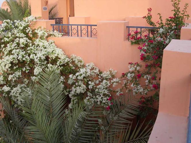 Fotografie, Reiseimpressionen, Blumen