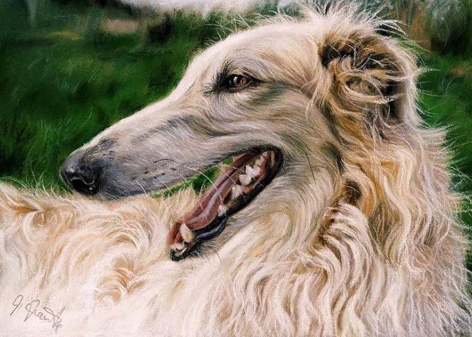 Haustier, Portrait, Hund, Barsoi, Pastellmalerei, Borzoi