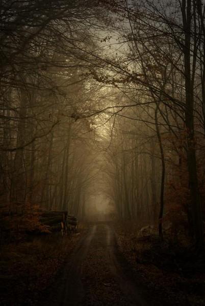 Nebel, Wald, Winter, Herbst, Landschaft, Fotografie