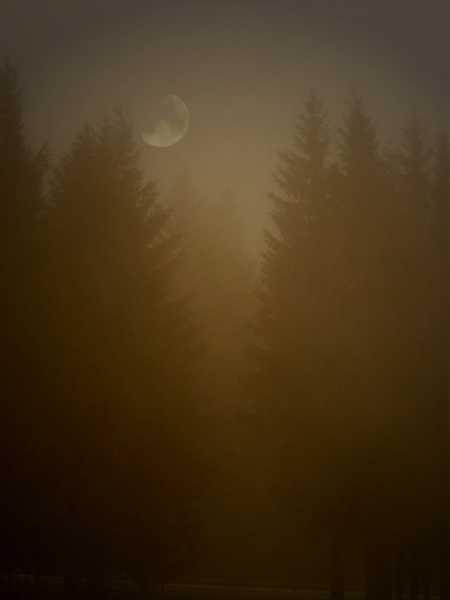 Nebel, Fotografie, Landschaft, Tanne, Mond