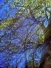 Baum, Farben, Sommer, Natur