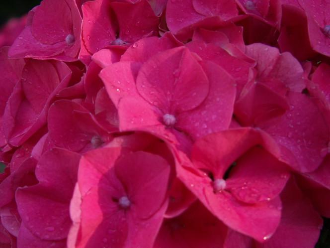 Welt, Fotografie, Pflanzen, Pink