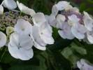 Fotografie, Pflanzen, Welt