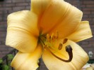 Pflanzen, Welt, Fotografie