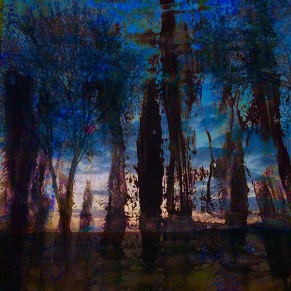 Baum, Himmel, Schatten, Blau, Licht, Mischtechnik