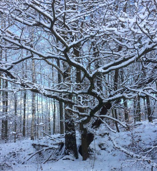 Bank, Sehen, Baum, Winter, Fotografie,