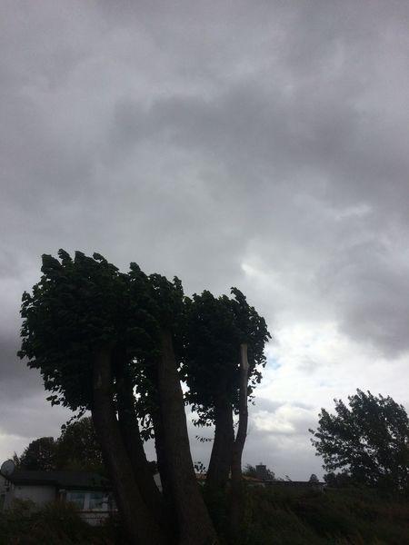 Baum, Himmel, Wind, Dunkel, Fotografie