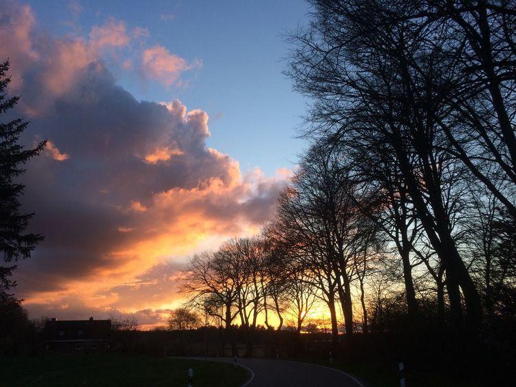 Sonne, Baumgeist, Abendhimmel, Fotografie