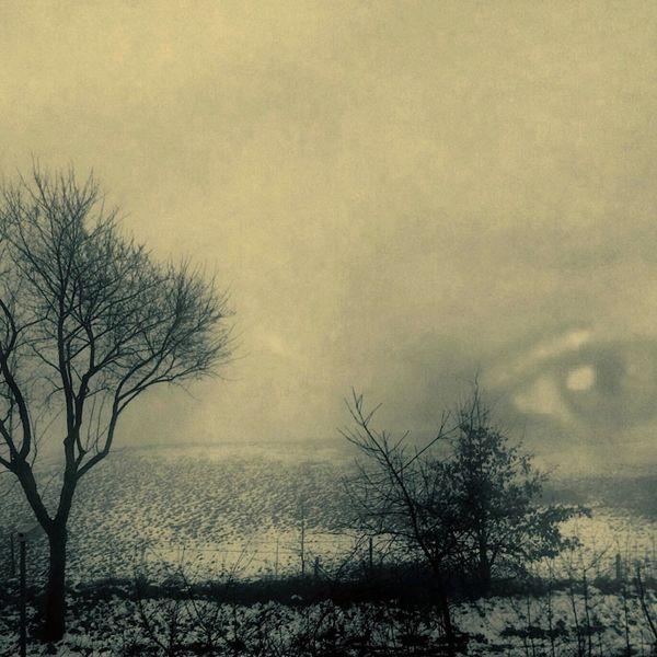 Baum, Busch, Augen, Nebel, Digitale kunst