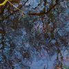 Baum, Spiegelung, Wasser, Fotografie