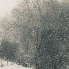 Schneesturm, Flocken, Baum, Zaun