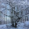 Bank, Sehen, Winter, Baum