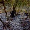 Riss, Moor, Baumstumpfe, Spiegelung
