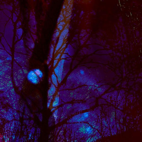 Blauer mond, Baum, Violette nacht, Digitale kunst