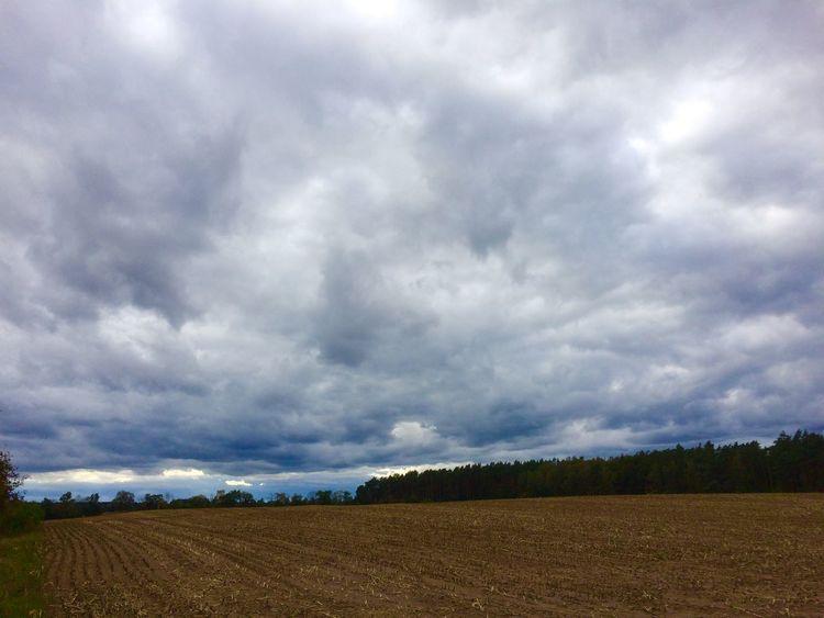 Wald, Wolken, Himmelwieder, Feld, Fotografie, Herbst