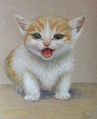 Katze, Zeichnung, Zeichnungen, Tiere,