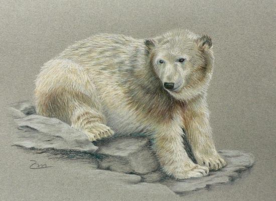 Zeichnung, Zoo, Berlin, Knut, Eisbär, Zeichnungen
