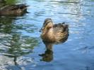 Fotografie, Ente, Süße