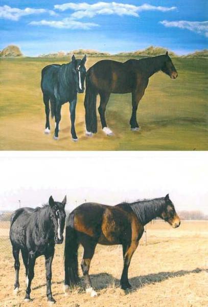 Himmel, Braun, Blau, Wiese, Schwarz, Pferde