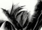 Zeichnung, Schwarzweiß, Wahnsinn, Digital