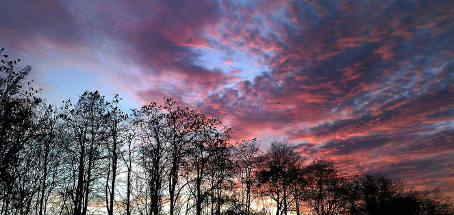 Sonne, Krähe, Untergang, Fotografie, Baum, Landschaft