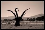 Landschaft, Namib, Weite, Stille