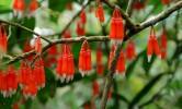 Blumen, Wald, Fotografie, Regenwälder