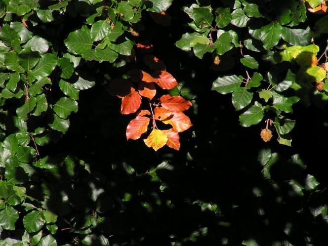Herbst, Fotografie, Bucheckern